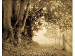 Serenity Walk